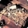 В коллекции гетмана Мазепы был камень, похожий на всемирно известный алмаз «Шах» весом почти 90 карат
