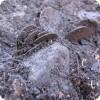 Под Воронежем спрятаны сотни кладов